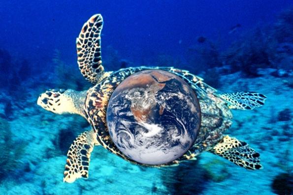 sea turtle_600